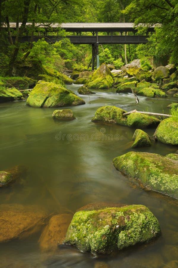 Flod med en dold bro i en frodig grön skog arkivfoton