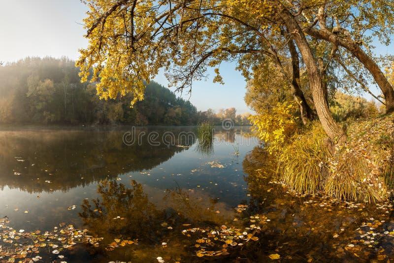 Flod med höstsidor royaltyfri foto