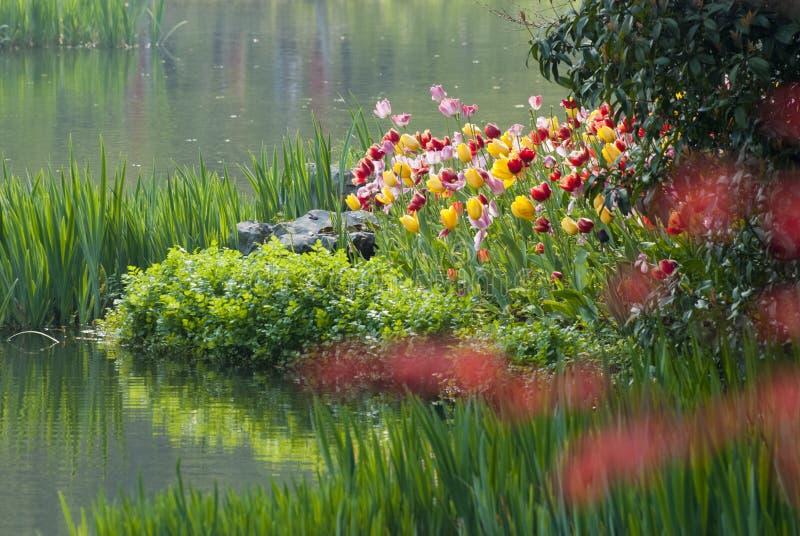 Flod med tulpanblomman i skog royaltyfri bild