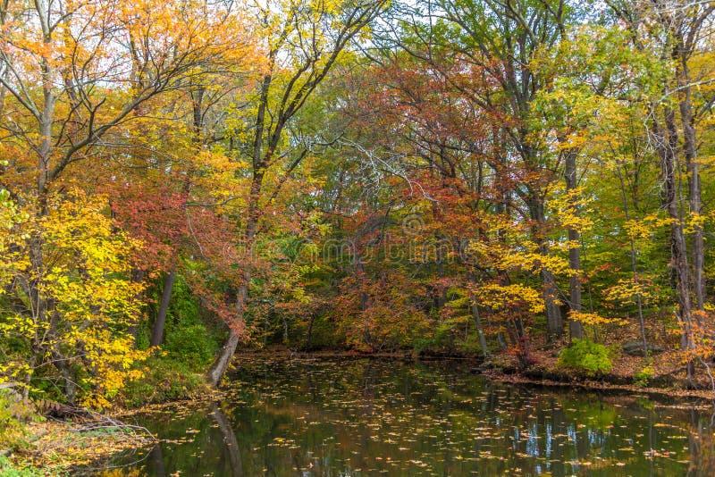 Flod mycket av stupade tjänstledigheter under nedgånglövverk i New England royaltyfri foto