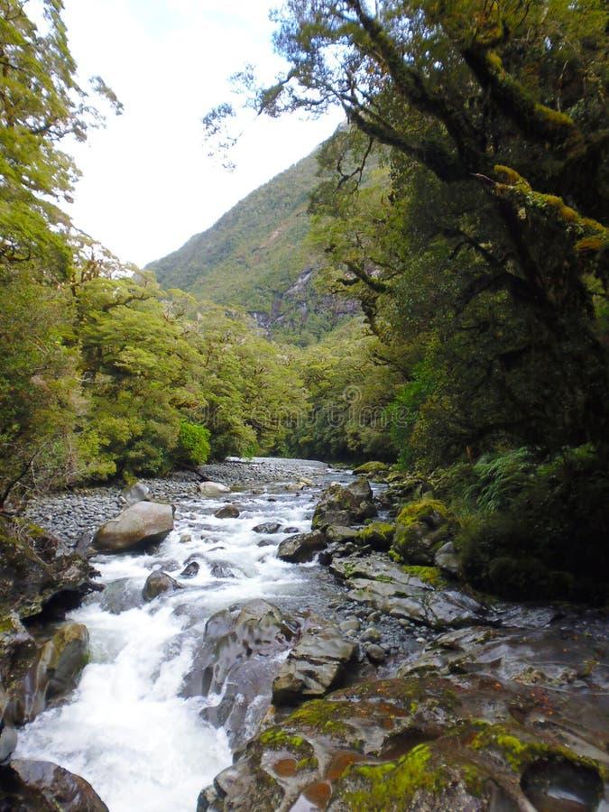Flod nära Milford Sound Nya Zeeland fotografering för bildbyråer