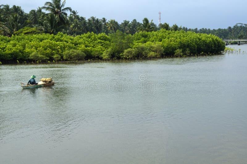 Flod och mangrove arkivfoton