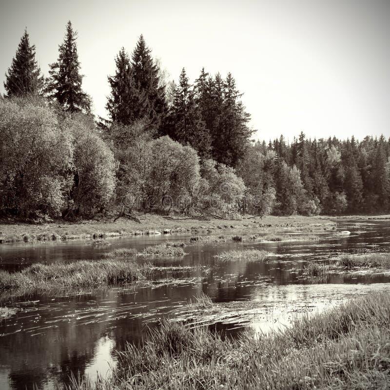 Flod och skog royaltyfria foton