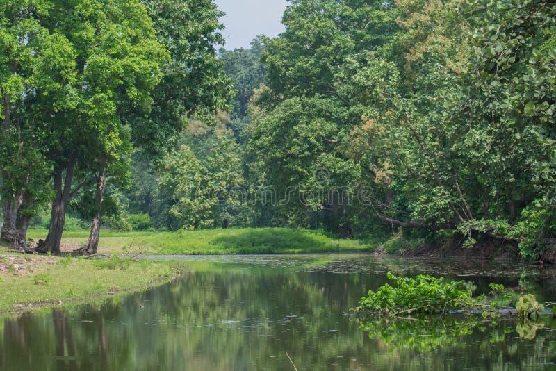 Flod och träd i nationalpark fotografering för bildbyråer