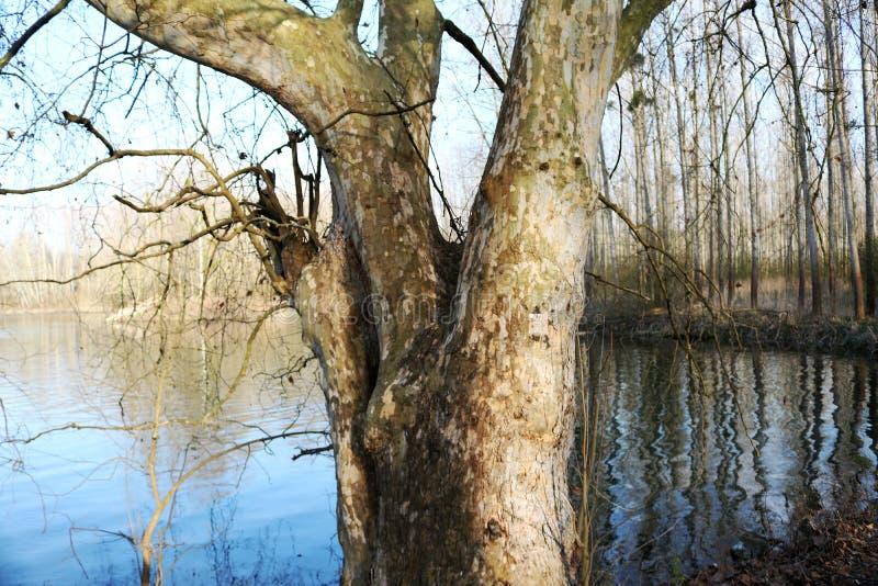 Flod och tree royaltyfria bilder