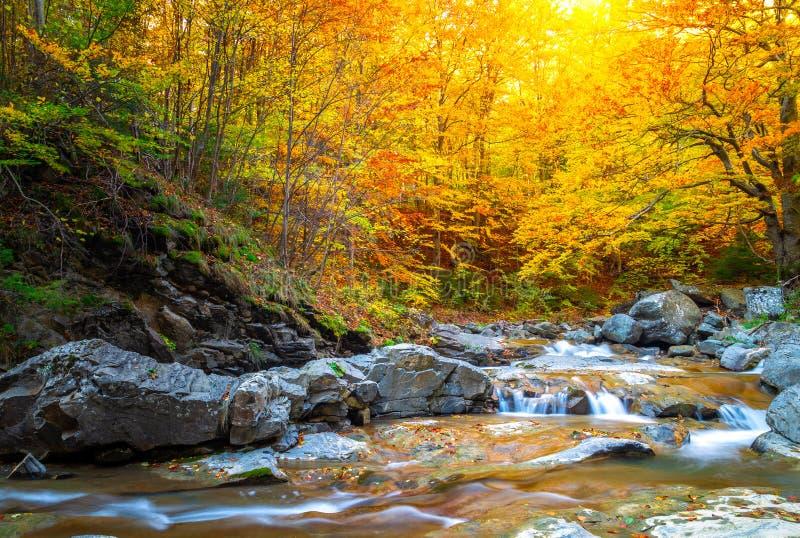 Flod på lövverk för höst för autumskog härlig, vattenfall och bergström i skogen royaltyfria foton