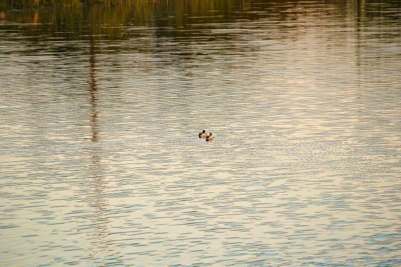 Flod sjö royaltyfria bilder