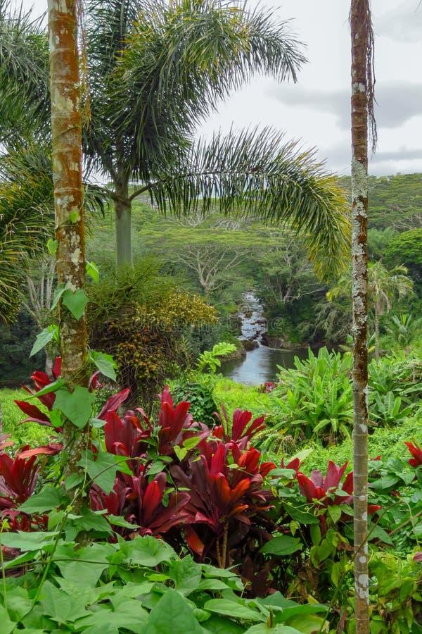 Flod som flödar under frodig tropisk vegetation, växter och träd, Kauai, Hawaii, USA arkivbild