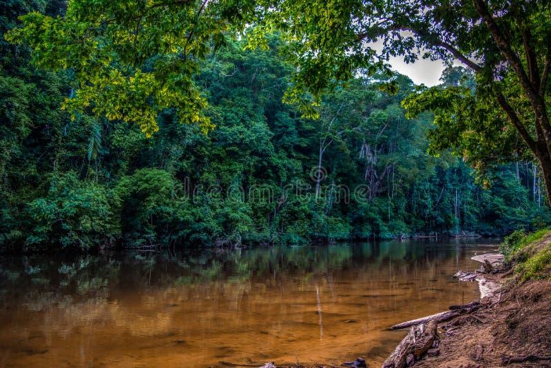 Flod Tembeling i Taman Negara, Malaysia arkivbilder