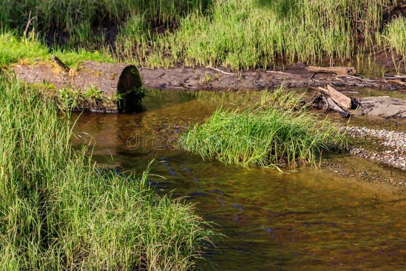 Flod till och med gräsröjning fotografering för bildbyråer