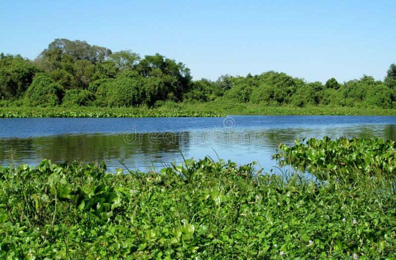 Flod Uruguay för blått vatten i Brasilien royaltyfri fotografi