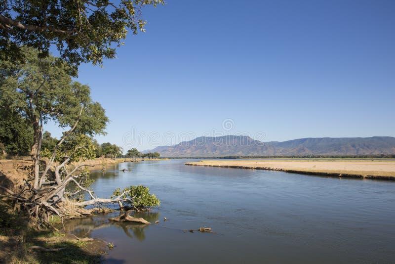 flod zambezi arkivbild