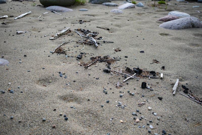 Flodavskräde på en sandig strand arkivfoton