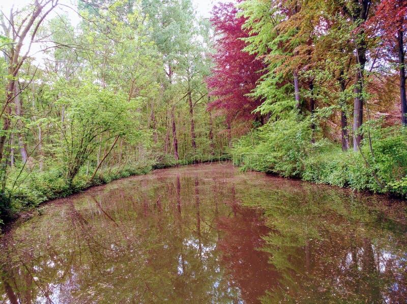 Floden av Belgien parkerar arkivfoton