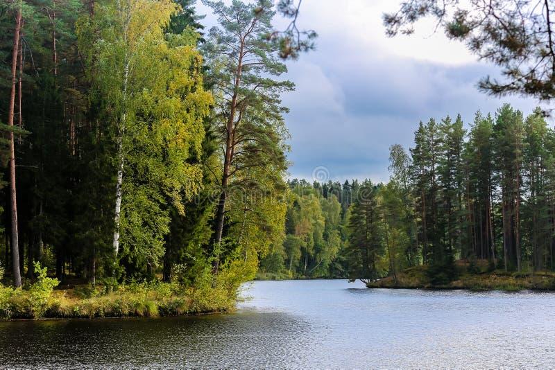 Floden böjer till och med skogarna arkivbilder