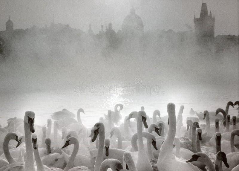 Floden i vinter arkivfoto