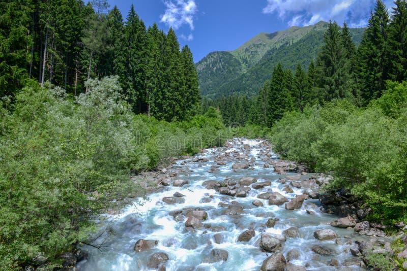 Floden som flödar i Adamelloen naturliga Brenta, parkerar royaltyfri bild