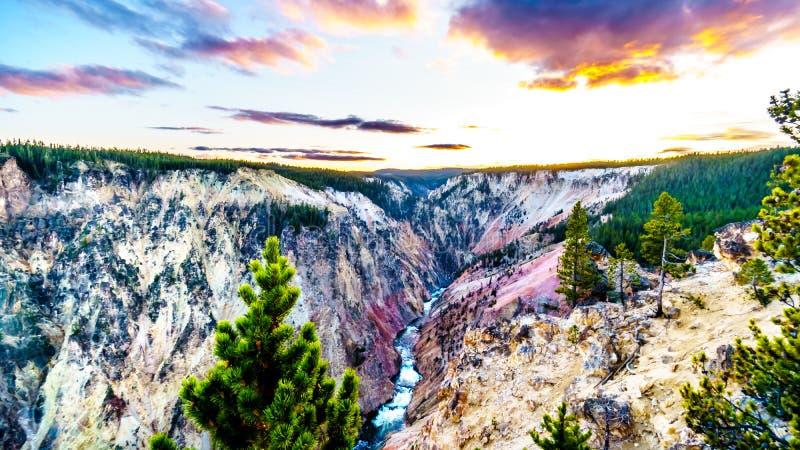 Floden Yellowstone i nationalparken Yellowstone i Wyoming, Förenta staterna royaltyfria bilder