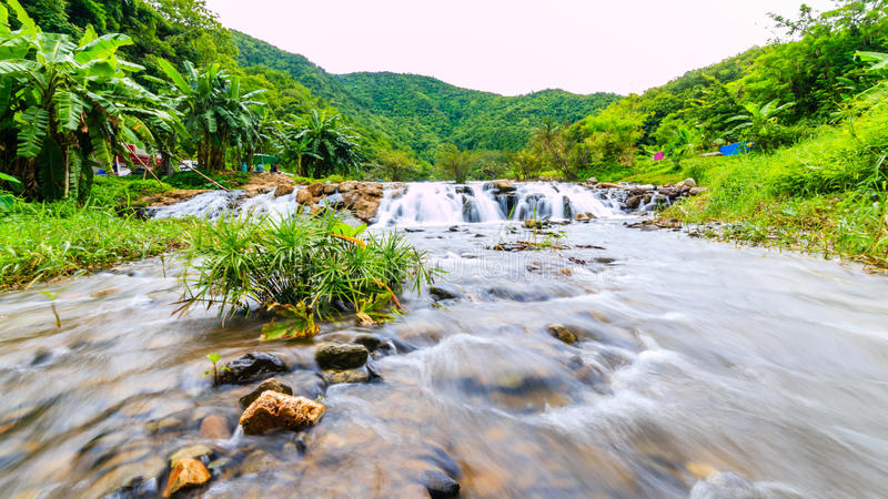 Floder i stora skogar är överflödande royaltyfria bilder