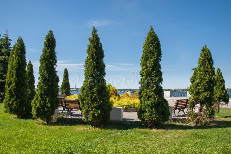 Flodinvallning med grön gräsmatta och kolonn-formade träd i royaltyfria bilder