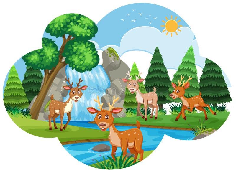 Flodplats med deers royaltyfri illustrationer