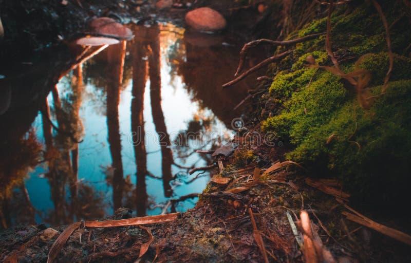 Flodsäng med en reflexion arkivbild