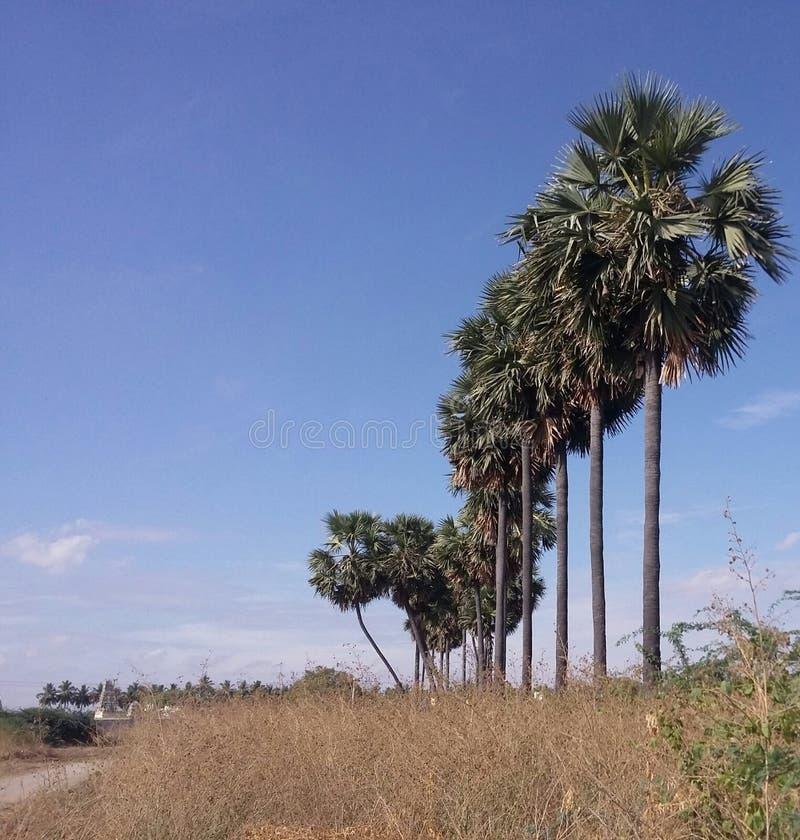 Flodsidopalmträd royaltyfri foto