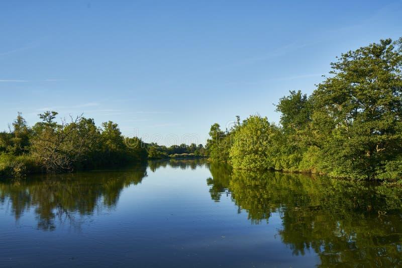 Flodskogsol fotografering för bildbyråer