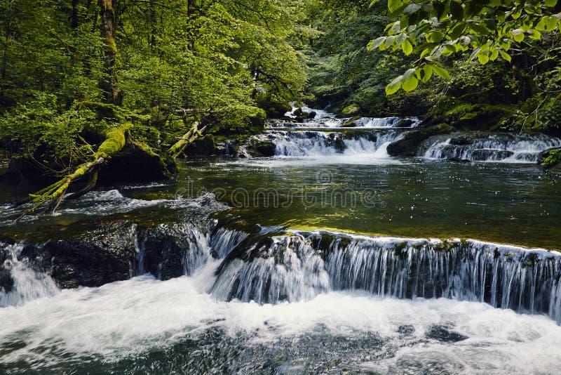 Flodskogvattenfall arkivfoton