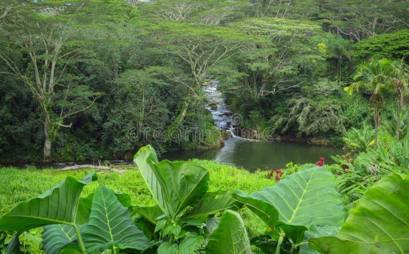 Flodspring till och med den frodiga gröna tropiska skogen, Kauai, Hawaii, USA royaltyfri foto