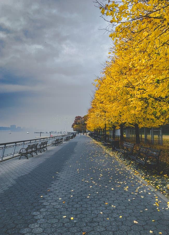 Flodstranden parkerar bänkar under gula träd i höst royaltyfri bild