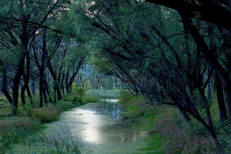 flodtrees royaltyfria bilder