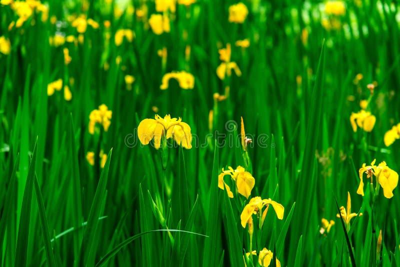 Floewers florecientes de Unkown en días de verano fotografía de archivo libre de regalías