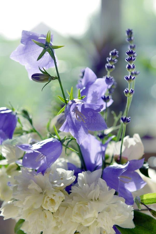 Floewrs de Provence stock fotografie