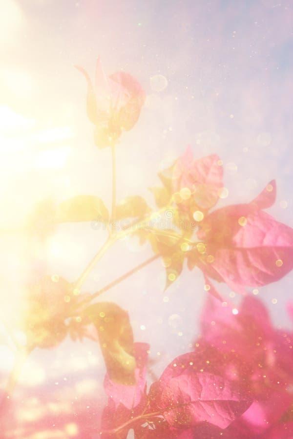 Floewrs no nascer do sol retro da imagem filtrado fotografia de stock royalty free