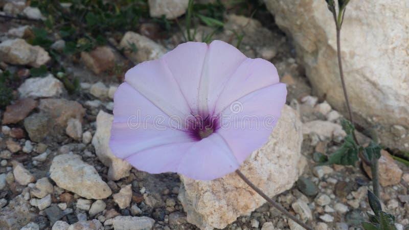 Flom rif is uw foto toevoegt stock foto's
