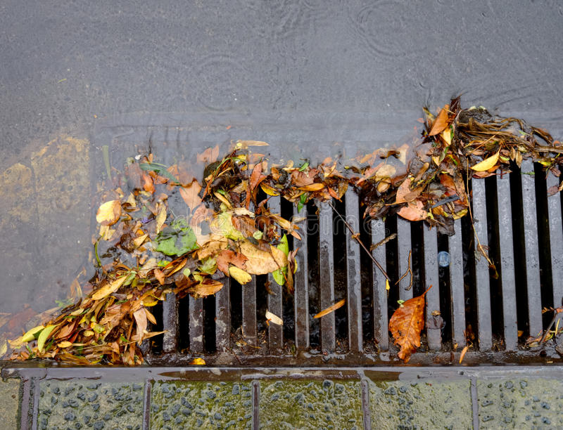 Flood of leaves. Drain being clogged by leaves as rainwater floods in royalty free stock photos