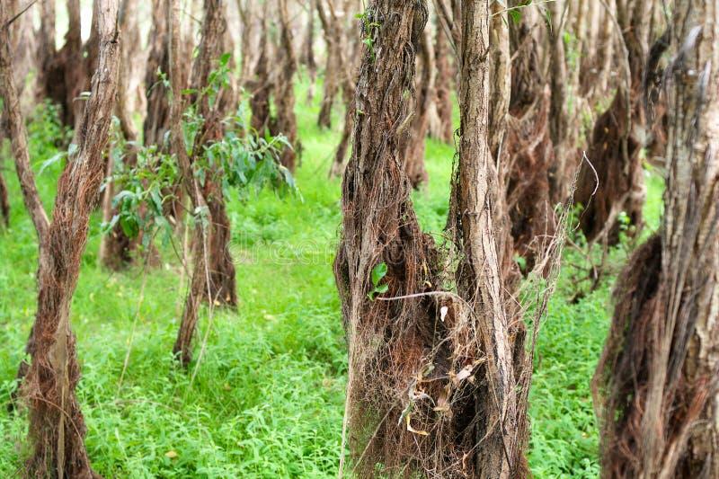 Flood-plain forest