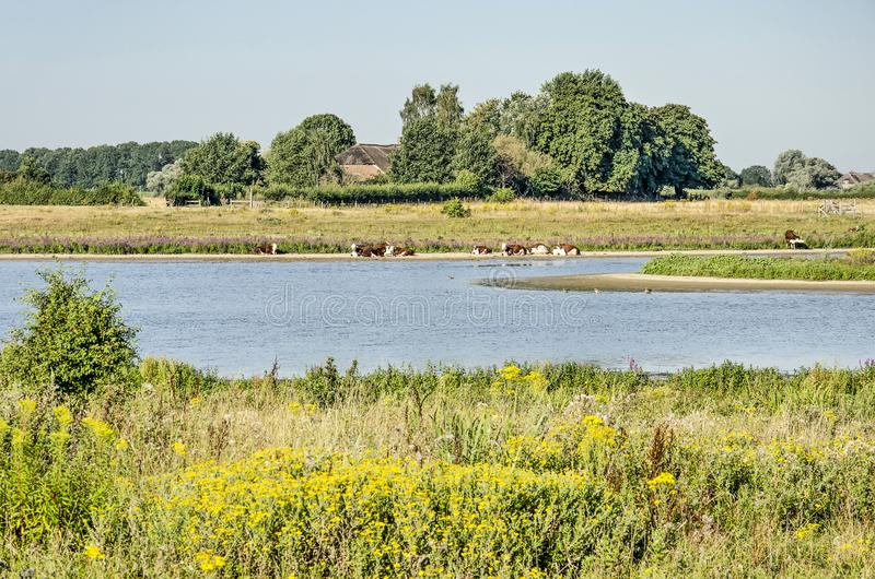 Flood plains near Zwolle, The Netherlands. View across the floodplains at Vreugerijkerwaard nature reserve near Zwolle, the Netherlands, with river channels royalty free stock photos