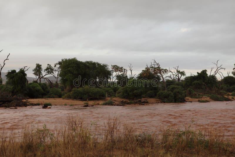 Flood in the Samburu River in the north of Kenya royalty free stock image