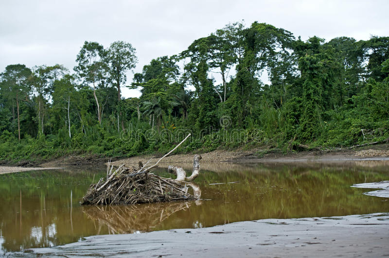 Flooded areas at the river side. Of Tambopata river, Tambopata National Reserve, Madre de Dios, Peru royalty free stock photos
