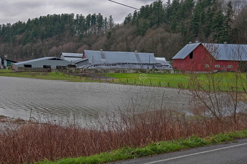 Flooded Dairy Farm. STANWOOD, WA – DECEMBER 14: - Flood waters from Stillaguamish river over dairy farms caused farmers hardship. The natural disaster stock photos