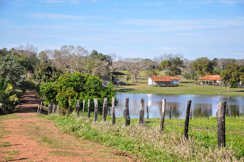 Flooded farm, Mato Grosso do Sul (Brazil). Flooded farm, Pantanal, Mato Grosso do Sul (Brazil stock photography