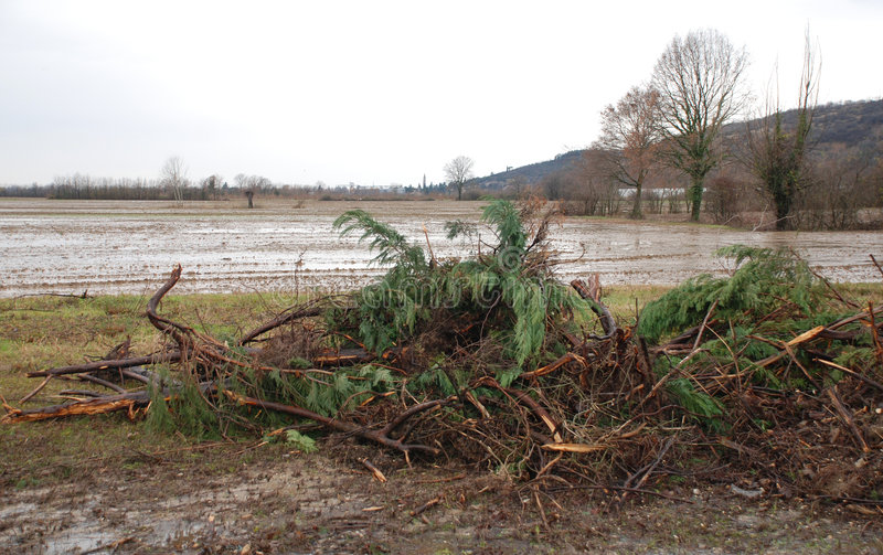Flooded Field with Debris Trees. A field lies flooded following heavy and prolonged winter storms near the Italian town of Aquilea stock photography