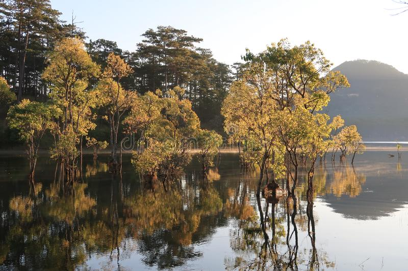 Flooded forest reflection on the lake with boatman in magic light part 6. Submerged trees with green fresh leaves reflecting on the lake and the boatman at royalty free stock image