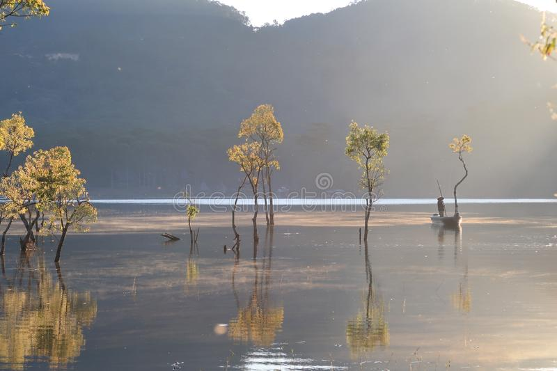 Flooded forest reflection on the lake with boatman in magic light part 5. Submerged trees with green fresh leaves reflecting on the lake and the boatman at royalty free stock photo