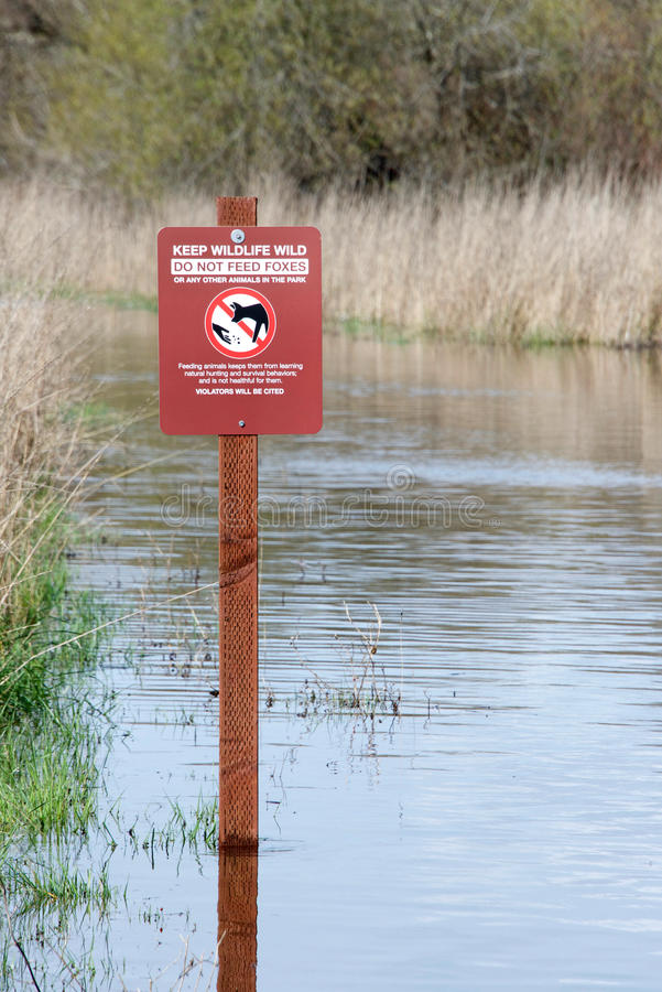 Flooded hiking trail. Sign cautioning hikers not to feed wildlife, submerged in flood waters at Coyote Hills in Northern California after recent torrential rain stock photography