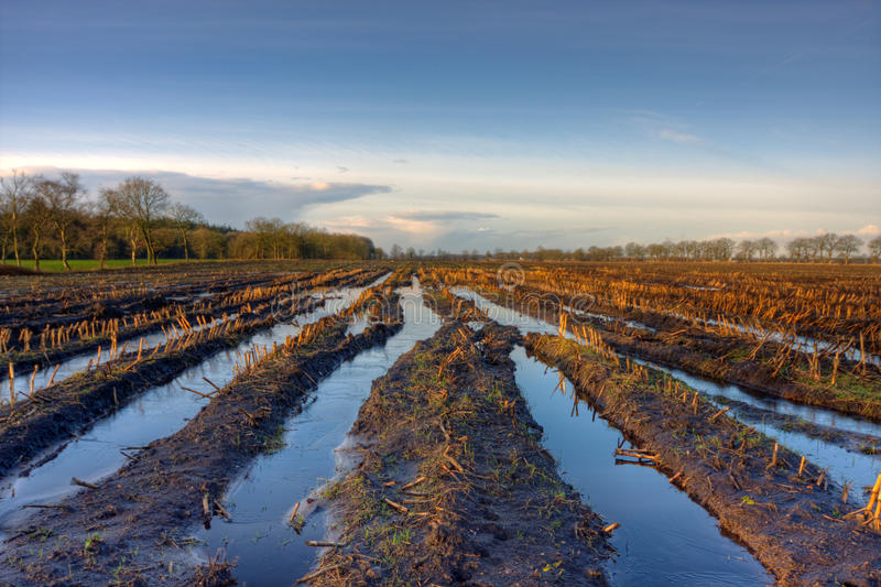 Download Flooded maize field stock photo. Image of flooded, sweetcorn - 22989892