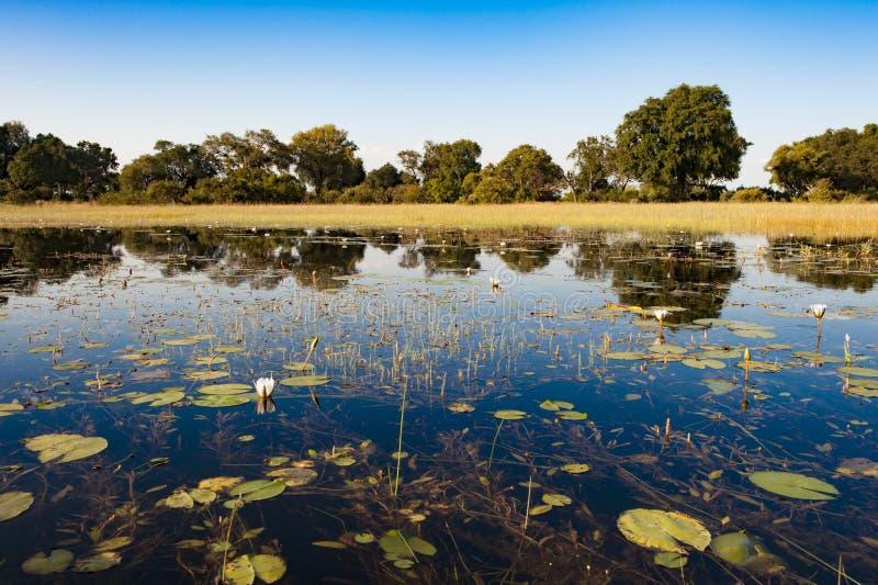 Flooded Okavango Delta stock photography