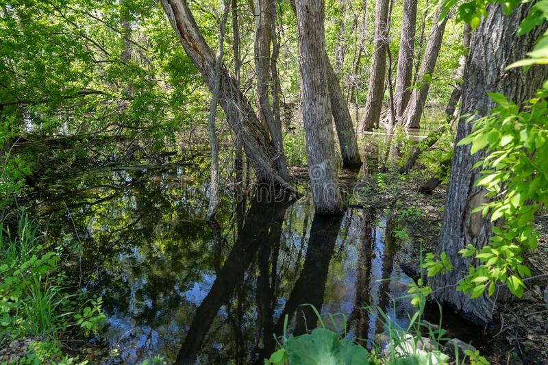 Flooded park with trees underwater from heavy rains at Clifton French Regional Park in Plymouth, Minnesota.  royalty free stock images